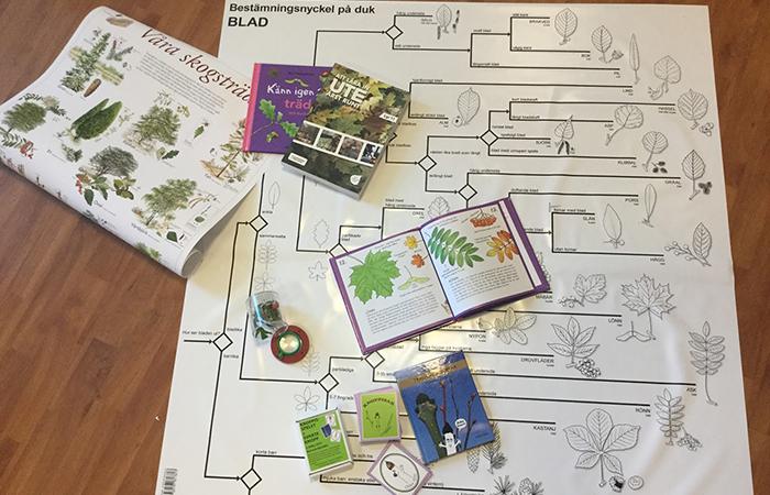 """Vitt blad med ett """"släktträd"""" för blad, ovanpå böcker om träd"""